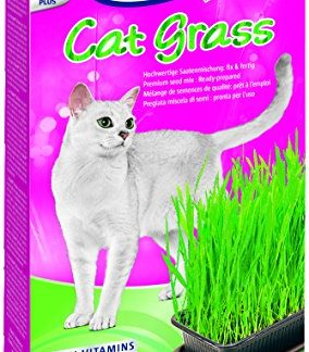 Vitakraft – 24031 – Herbe à Chat – Cat-Gras